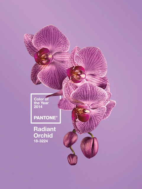 PANTONE Color of the Year 2014 - 18-3224 Radiant Orchid w Logo v1